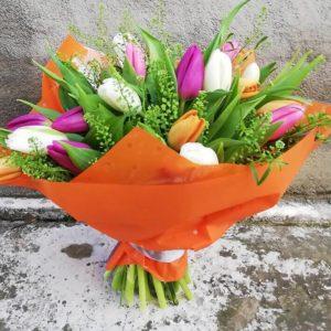 Mix of tulips