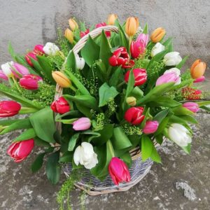 Tulips basket