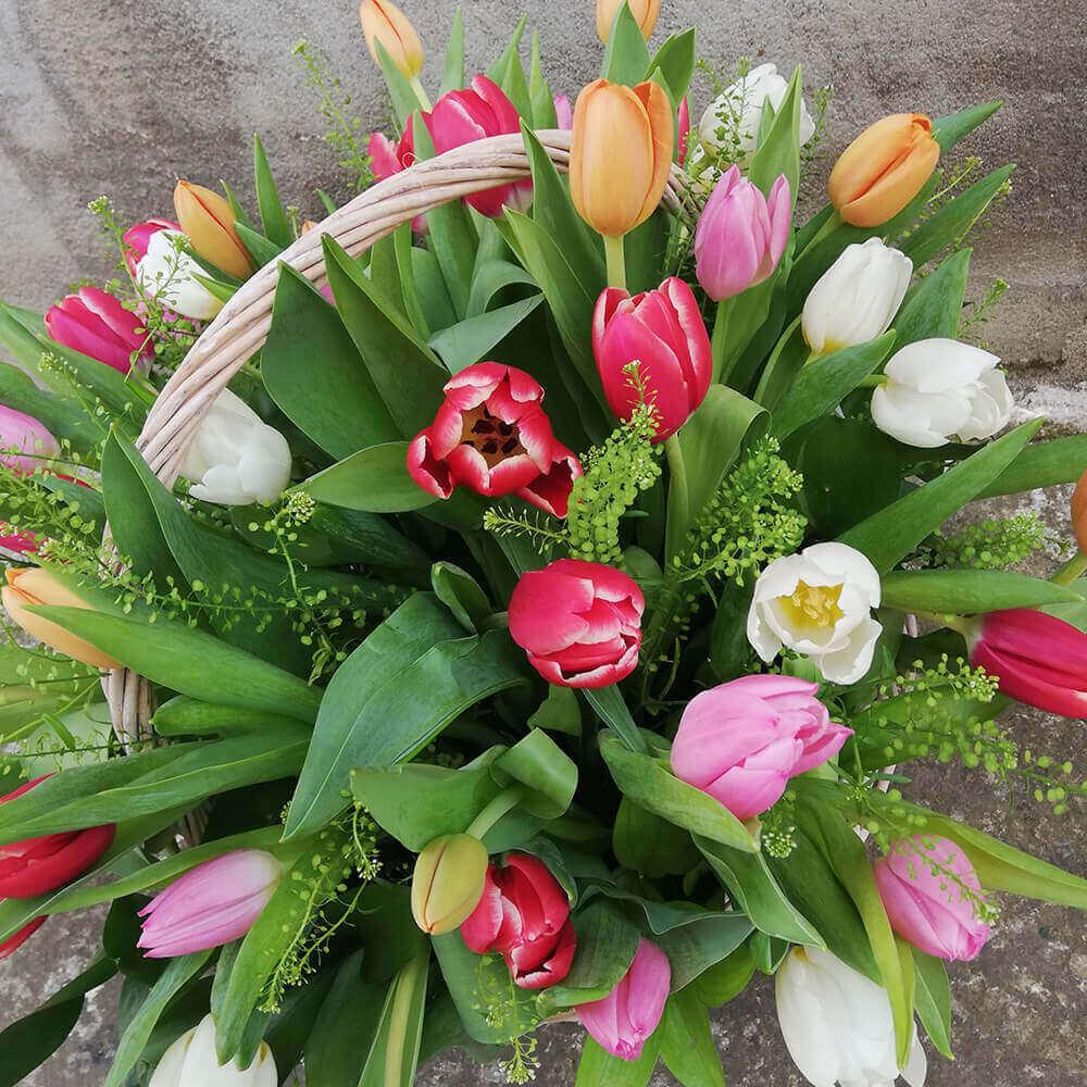 Tulips basket limassol