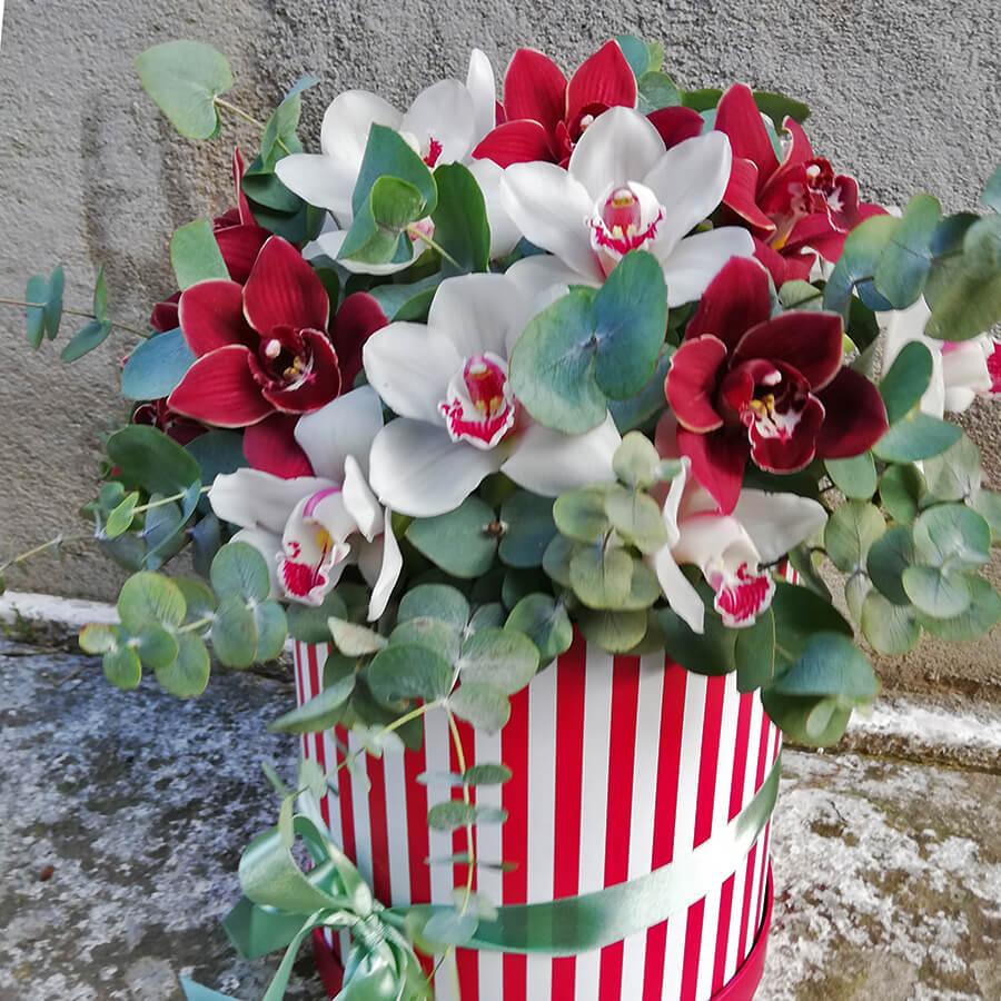 Благородные орхидеи в коробке