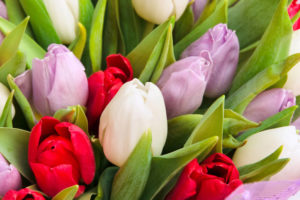 тюльпаны доставка лимассол