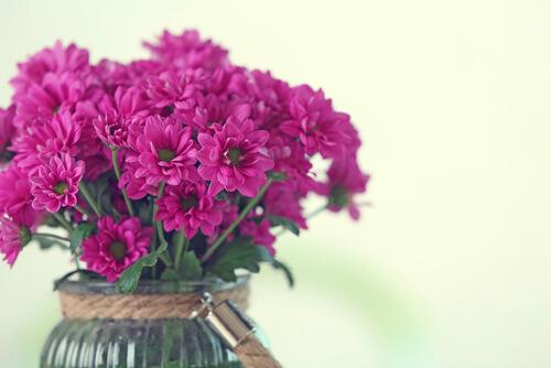 хризантемы лимассол
